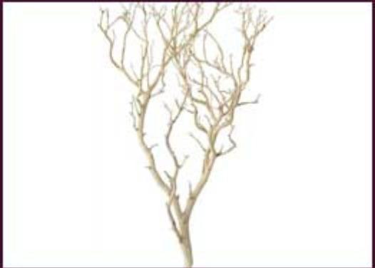 Wholesale Decorative Branches Manzanita And Botanical